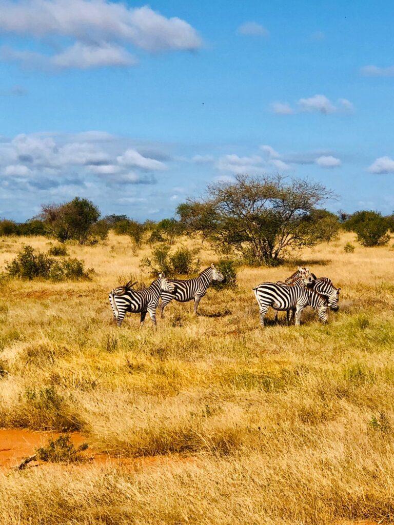 capodanno in kenya